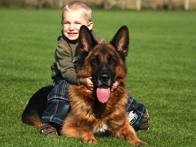 d797222fc09 Tyto vlastnosti z něho činí psa všestranně užitkového